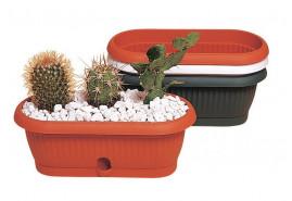 flowerpot for cacti